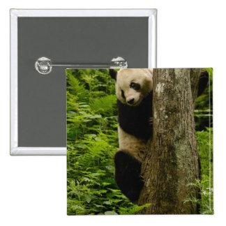 Giant panda Ailuropoda melanoleuca) Family: 2 Pin