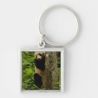 Giant panda Ailuropoda melanoleuca) Family: 2 Keychains