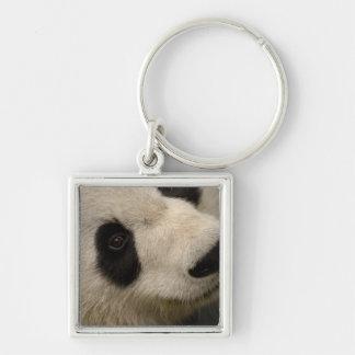 Giant panda (Ailuropoda melanoleuca) Family: 2 Silver-Colored Square Keychain