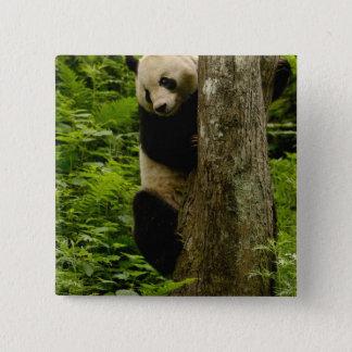 Giant panda Ailuropoda melanoleuca) Family: 2 Pinback Button