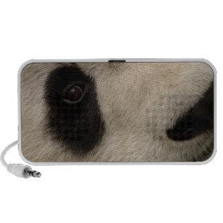 Giant panda (Ailuropoda melanoleuca) Family: 2 Portable Speaker