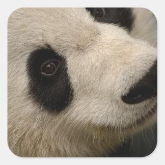 Giant panda (Ailuropoda melanoleuca) Family: 2 Square Sticker
