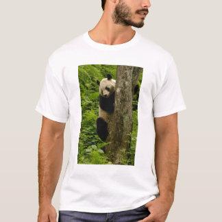 Giant panda Ailuropoda melanoleuca) Family: 2 T-Shirt