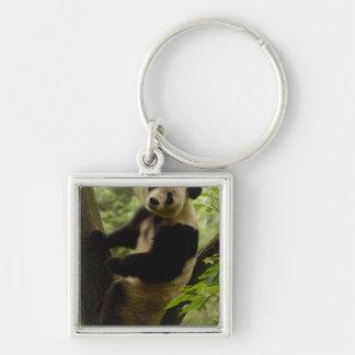 Giant panda Ailuropoda melanoleuca) Family: 3 Silver-Colored Square Keychain