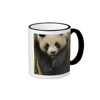 Giant panda (Ailuropoda melanoleuca) Family: 3 Mug