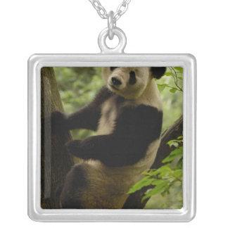 Giant panda Ailuropoda melanoleuca) Family: 3 Custom Necklace