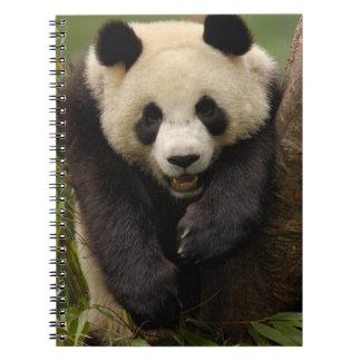 Giant panda (Ailuropoda melanoleuca) Family: 3 Spiral Note Book