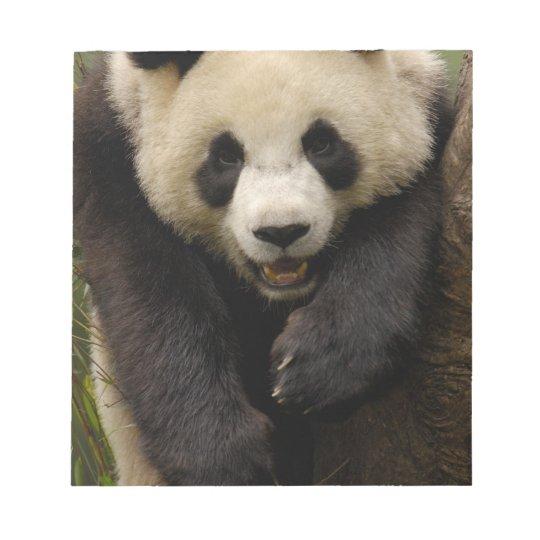 Giant panda (Ailuropoda melanoleuca) Family: 3 Notepad
