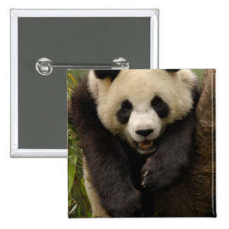 Giant panda (Ailuropoda melanoleuca) Family: 3 Pinback Button