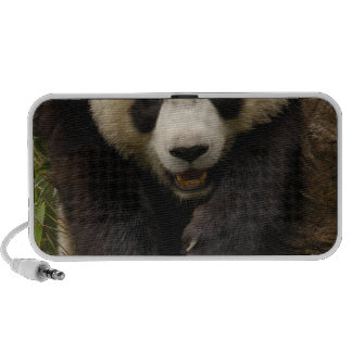 Giant panda (Ailuropoda melanoleuca) Family: 3 iPod Speaker