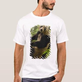 Giant panda Ailuropoda melanoleuca) Family: 3 T-Shirt