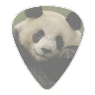 Giant panda Ailuropoda melanoleuca) Family: 4 Acetal Guitar Pick