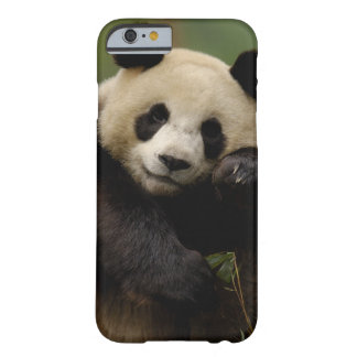 Giant panda Ailuropoda melanoleuca) Family: 4 Barely There iPhone 6 Case