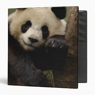 Giant panda Ailuropoda melanoleuca) Family: 4 Vinyl Binder