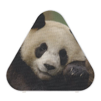 Giant panda Ailuropoda melanoleuca) Family: 4 Bluetooth Speaker