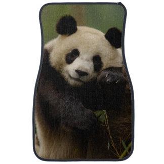 Giant panda Ailuropoda melanoleuca) Family: 4 Car Floor Mat