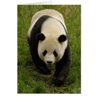 Giant panda (Ailuropoda melanoleuca) Family: 4 Card