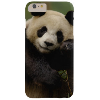 Giant panda Ailuropoda melanoleuca) Family: 4 Barely There iPhone 6 Plus Case