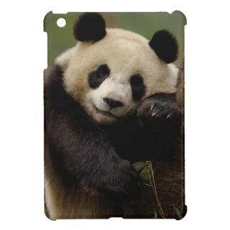 Giant panda Ailuropoda melanoleuca) Family: 4 Case For The iPad Mini
