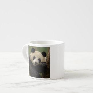Giant panda Ailuropoda melanoleuca) Family: 4 Espresso Cup