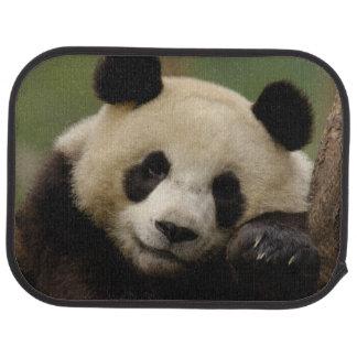 Giant panda Ailuropoda melanoleuca) Family: 4 Floor Mat