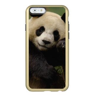 Giant panda Ailuropoda melanoleuca) Family: 4 Incipio Feather Shine iPhone 6 Case