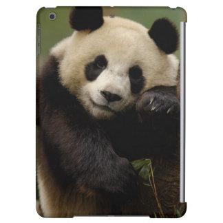 Giant panda Ailuropoda melanoleuca) Family: 4 iPad Air Cover
