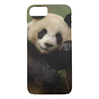 Giant panda Ailuropoda melanoleuca) Family: 4 iPhone 8/7 Case