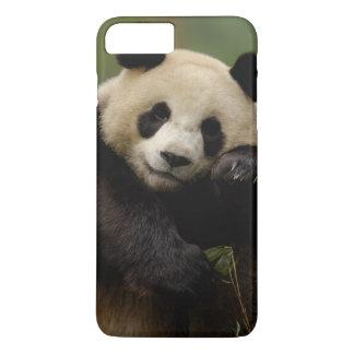 Giant panda Ailuropoda melanoleuca) Family: 4 iPhone 8 Plus/7 Plus Case