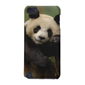 Giant panda Ailuropoda melanoleuca) Family: 4 iPod Touch 5G Cover