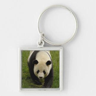 Giant panda (Ailuropoda melanoleuca) Family: 4 Silver-Colored Square Keychain