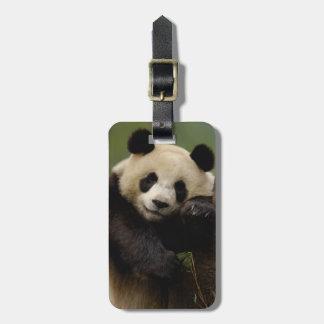 Giant panda Ailuropoda melanoleuca) Family: 4 Travel Bag Tags
