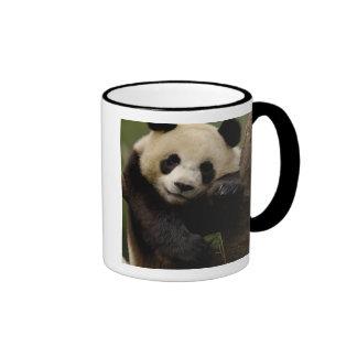 Giant panda Ailuropoda melanoleuca) Family: 4 Coffee Mug
