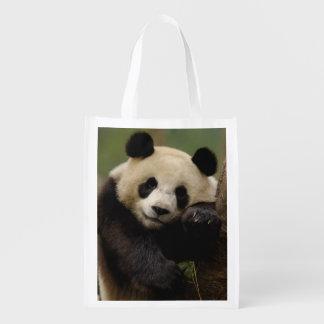 Giant panda Ailuropoda melanoleuca) Family: 4 Reusable Grocery Bags