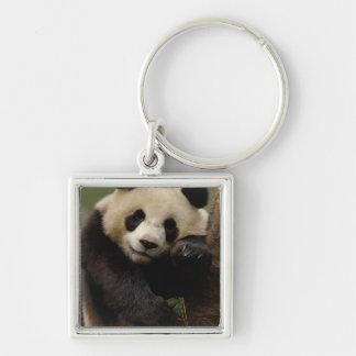 Giant panda Ailuropoda melanoleuca) Family: 4 Silver-Colored Square Keychain