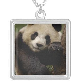 Giant panda Ailuropoda melanoleuca) Family: 4 Square Pendant Necklace