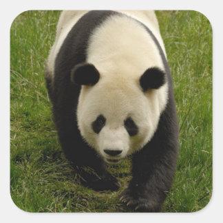 Giant panda (Ailuropoda melanoleuca) Family: 4 Square Sticker