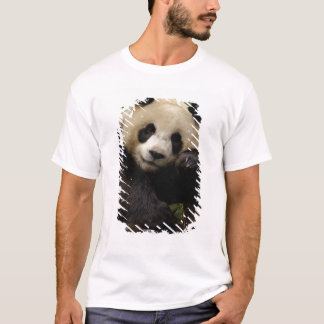 Giant panda Ailuropoda melanoleuca) Family: 4 T-Shirt