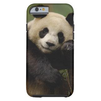 Giant panda Ailuropoda melanoleuca) Family: 4 Tough iPhone 6 Case
