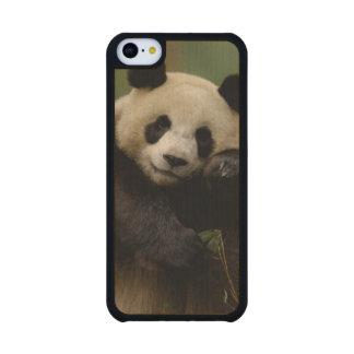 Giant panda Ailuropoda melanoleuca) Family: 4 Carved® Maple iPhone 5C Case