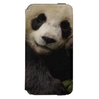 Giant panda Ailuropoda melanoleuca) Family: 4 Incipio Watson™ iPhone 6 Wallet Case