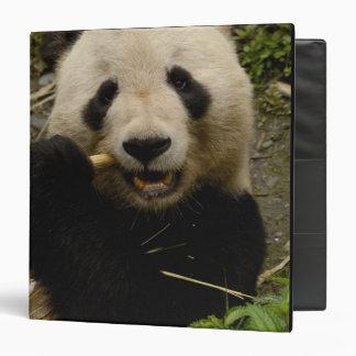 Giant panda Ailuropoda melanoleuca) Family: 5 Vinyl Binder
