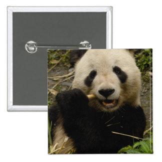Giant panda Ailuropoda melanoleuca) Family: 5 Button