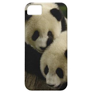 Giant panda (Ailuropoda melanoleuca) Family: 5 iPhone 5 Covers