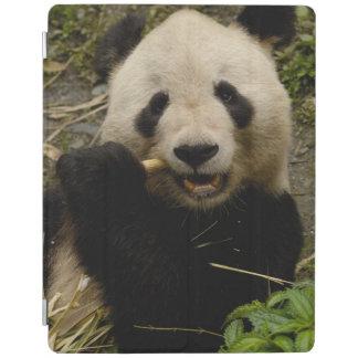 Giant panda Ailuropoda melanoleuca Family 5 iPad Cover