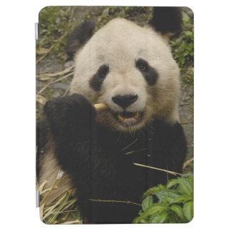 Giant panda Ailuropoda melanoleuca) Family: 5 iPad Air Cover