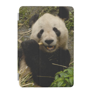 Giant panda Ailuropoda melanoleuca) Family: 5 iPad Mini Cover
