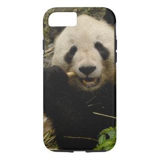 Giant panda Ailuropoda melanoleuca) Family: 5 iPhone 8/7 Case
