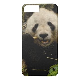 Giant panda Ailuropoda melanoleuca) Family: 5 iPhone 8 Plus/7 Plus Case