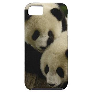 Giant panda (Ailuropoda melanoleuca) Family: 5 iPhone SE/5/5s Case